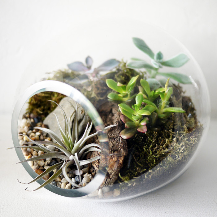bubble+terrarium
