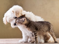 10 steps to a pet friendly home